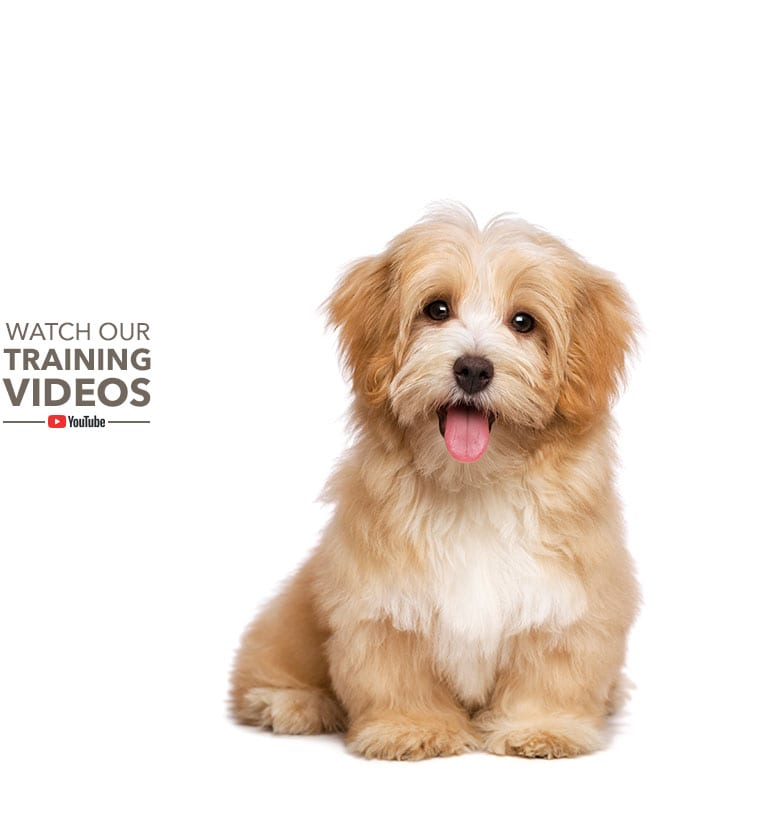Watch Our Puppy Training Videos