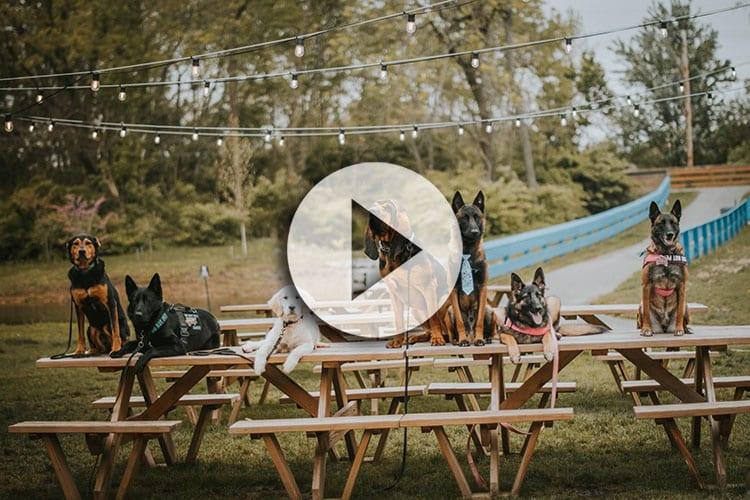 Board & Train Video